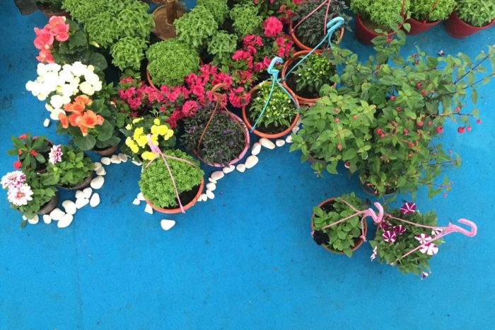 Karşıyaka Çiçek Festivali
